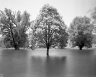photo of trees in a flood